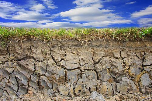 贝壳粉对污染土壤中Pb、Zn、Cd的稳定化作用